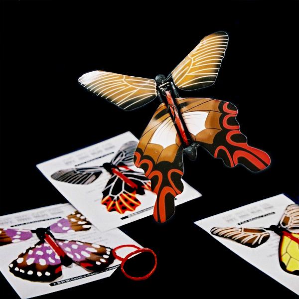 保育類蝴蝶組 1